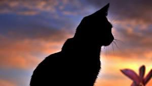 Обои Кошки Силуэт Животные