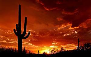 Обои Рассвет и закат Кактусы Силуэта Природа