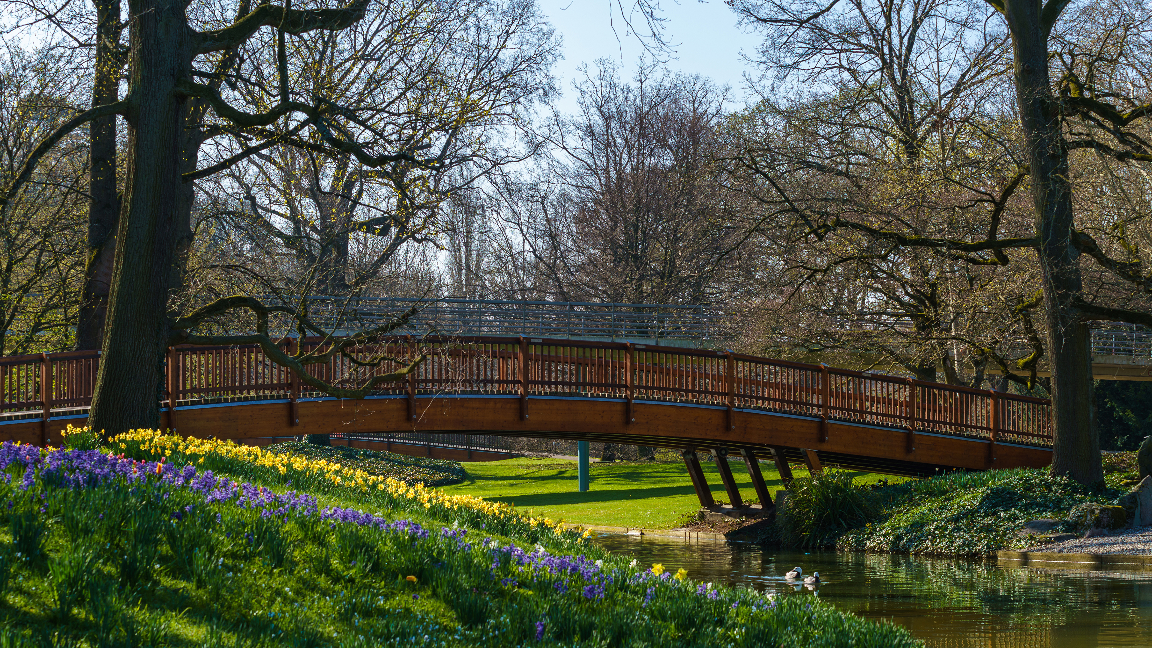 Фотография Германия Karlsruhe мост Весна Природа Парки Реки дерева 3840x2160 Мосты весенние парк река речка дерево Деревья деревьев