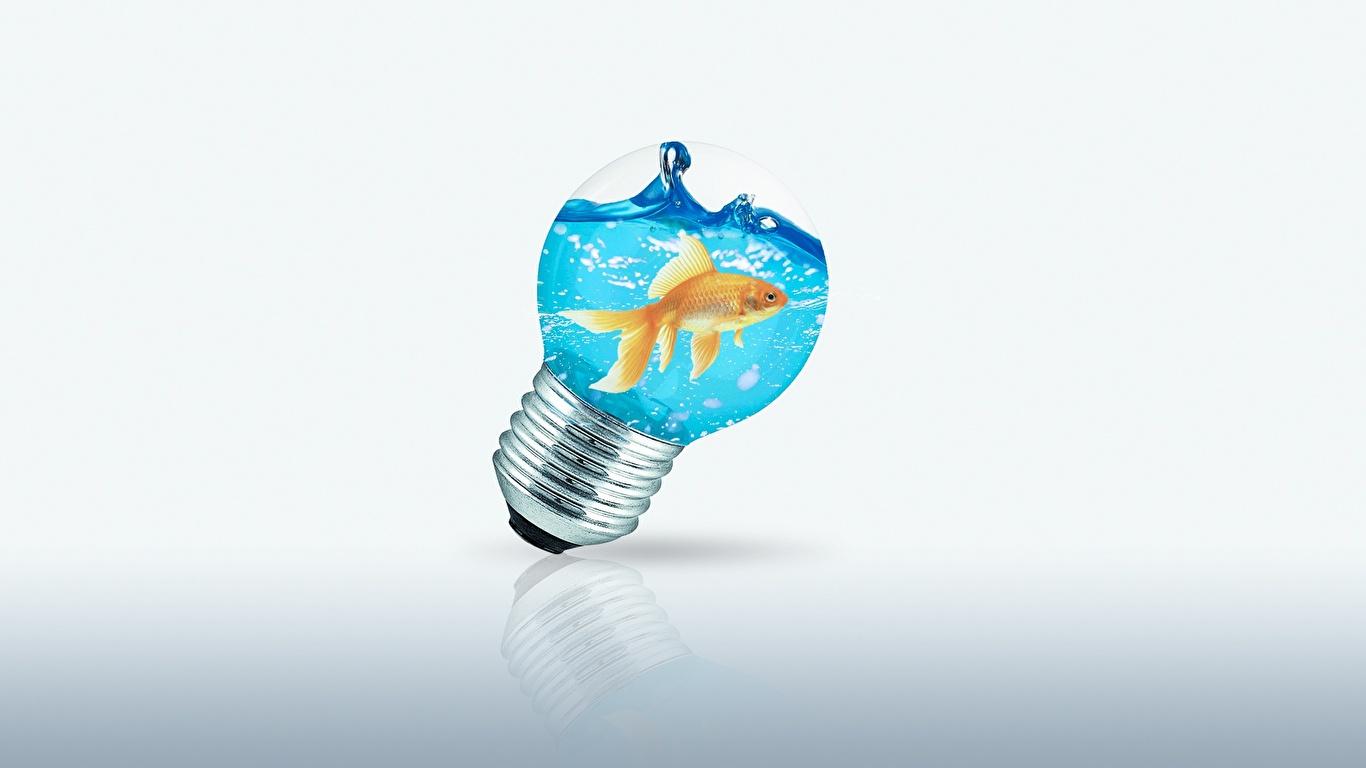 Картинки Рыбы Лампочка Креатив воде 1366x768 лампа накаливания креативные оригинальные Вода