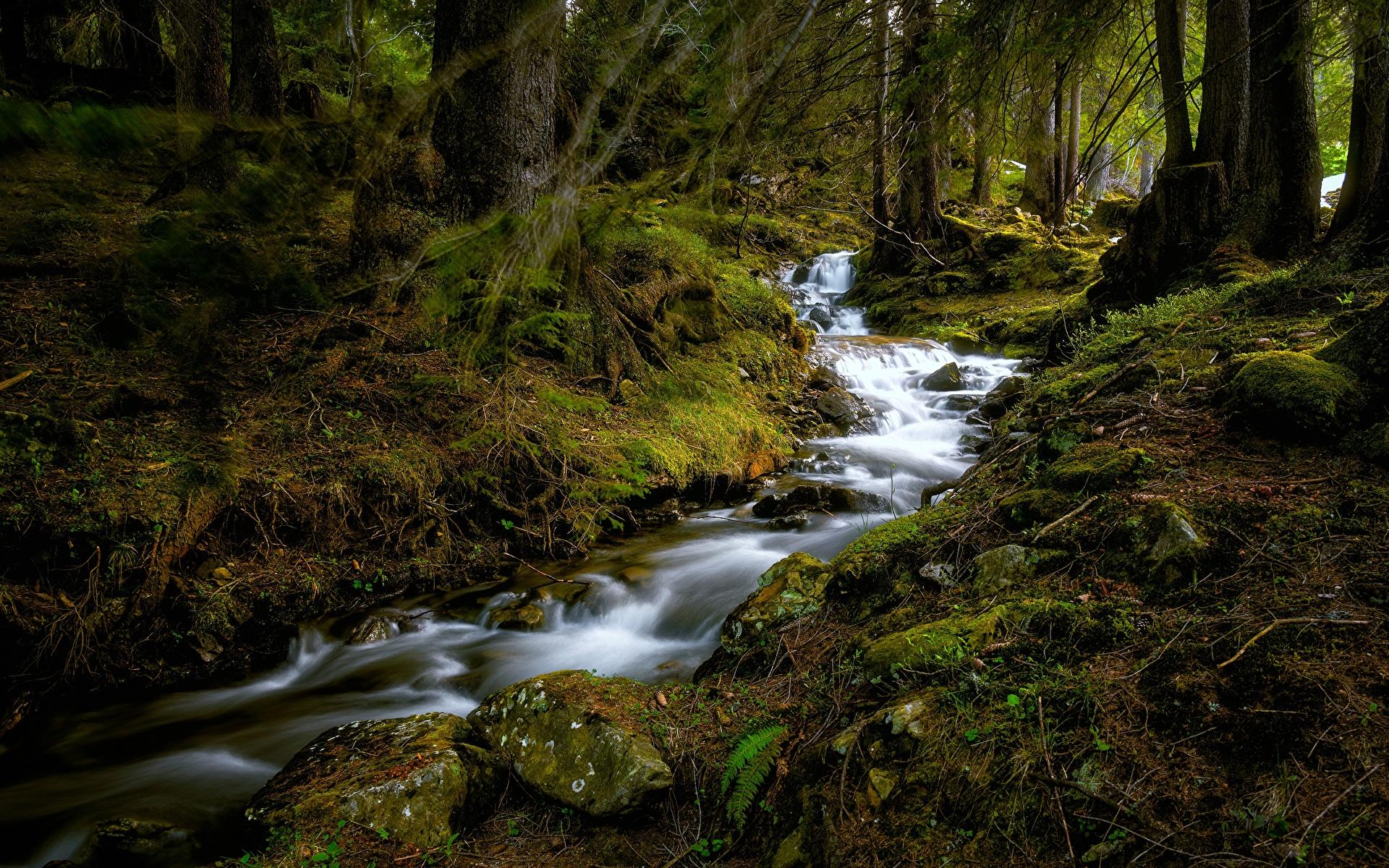 Фотография Швейцария Büelbach Ручей Природа Леса мха Камни дерево 1920x1200 ручеек лес Мох мхом Камень дерева Деревья деревьев