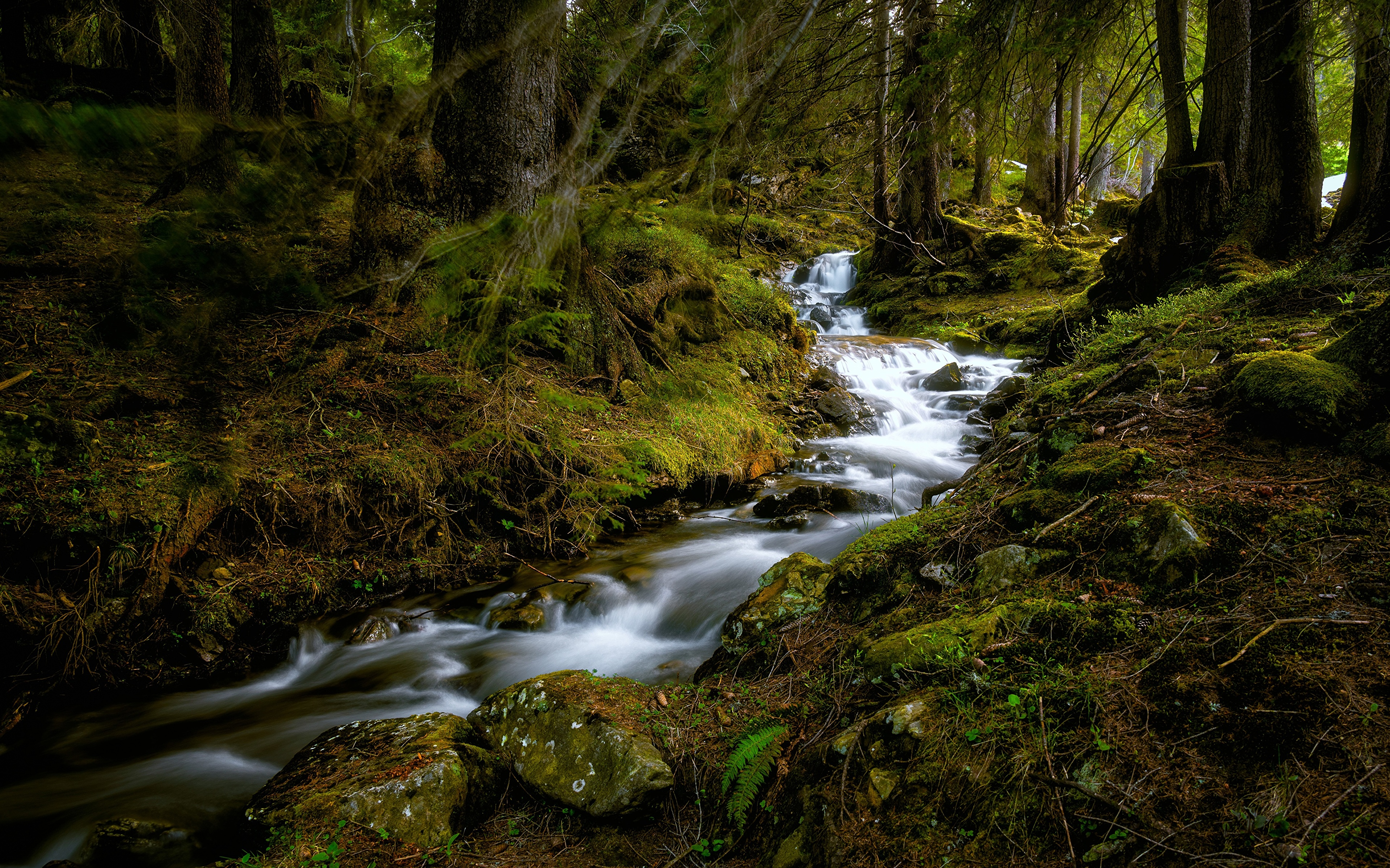 Фотография Швейцария Büelbach Ручей Природа Леса мха Камни дерево 3840x2400 ручеек лес Мох мхом Камень дерева Деревья деревьев