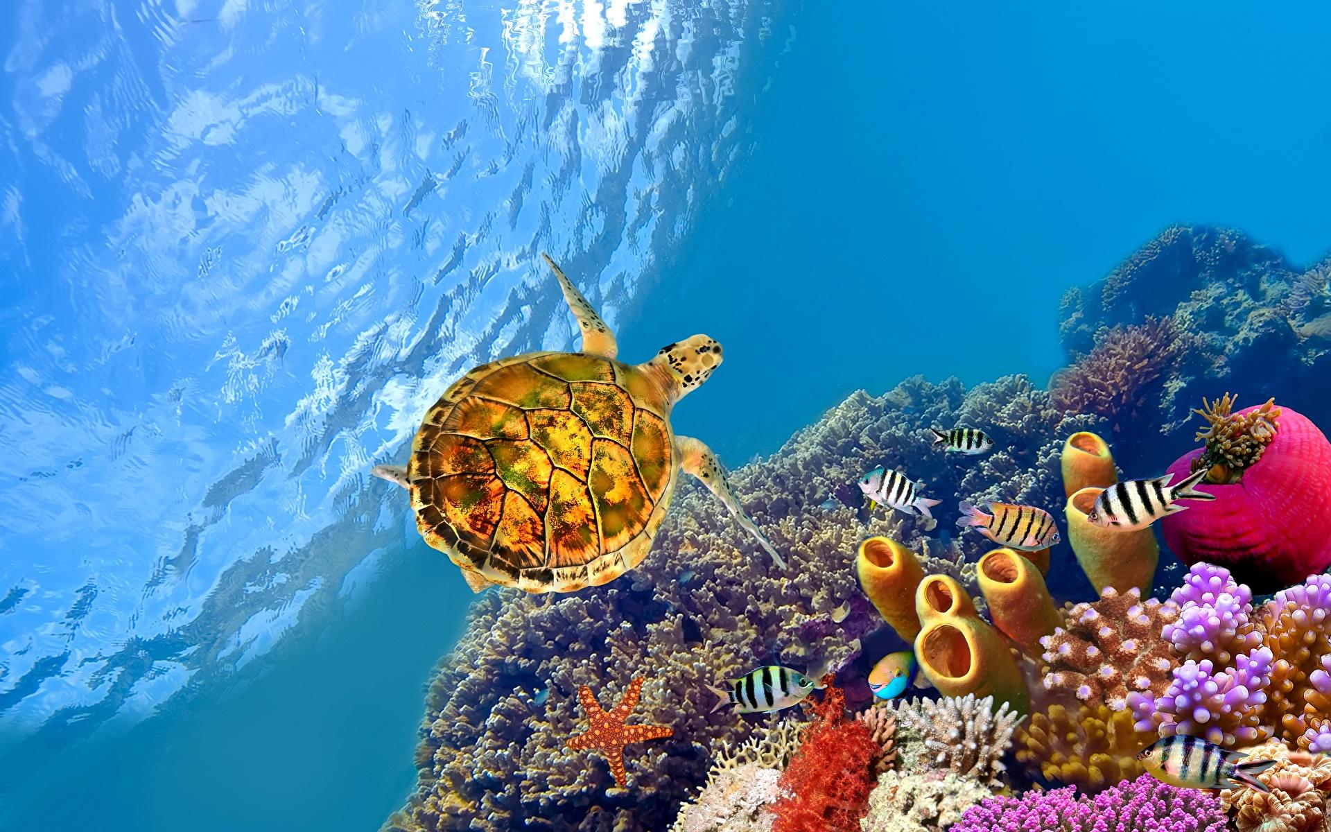 Обои для рабочего стола Рыбы Черепахи Подводный мир животное 1920x1200 Животные