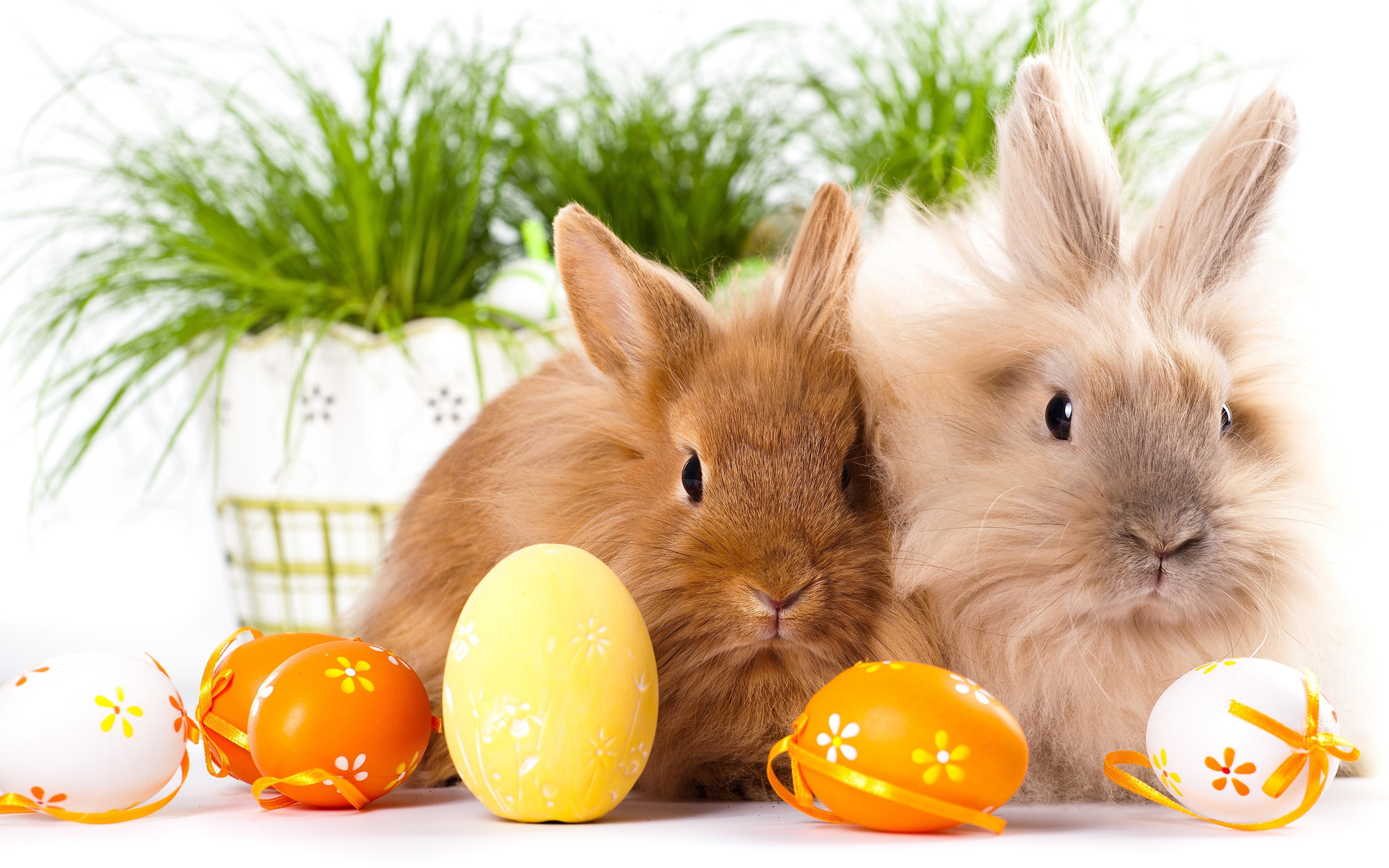 Кролики и Яйца
