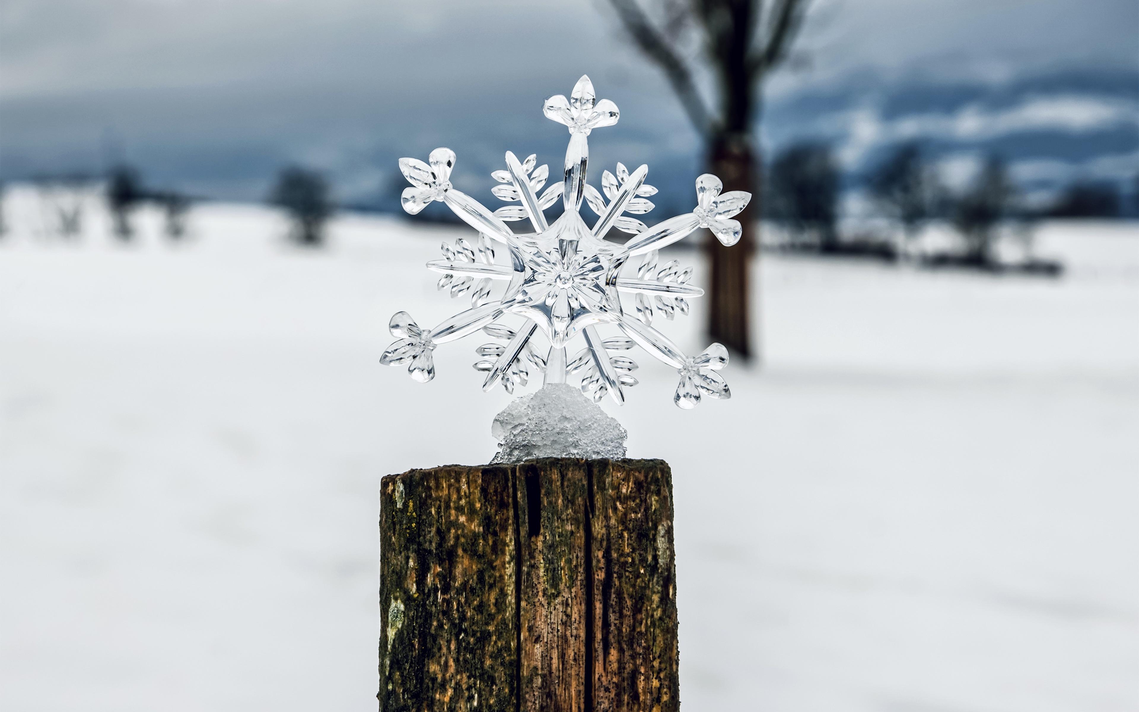 Фото боке Лед Зима Природа снежинка Пень 3840x2400 Размытый фон льда зимние Снежинки пне