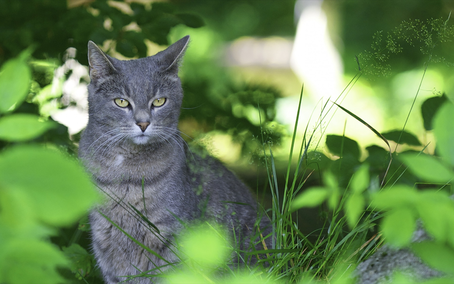 Дымчатый кот в траве без смс
