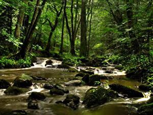 Обои Водопады Леса Ручей Hochwasser Австрия Природа