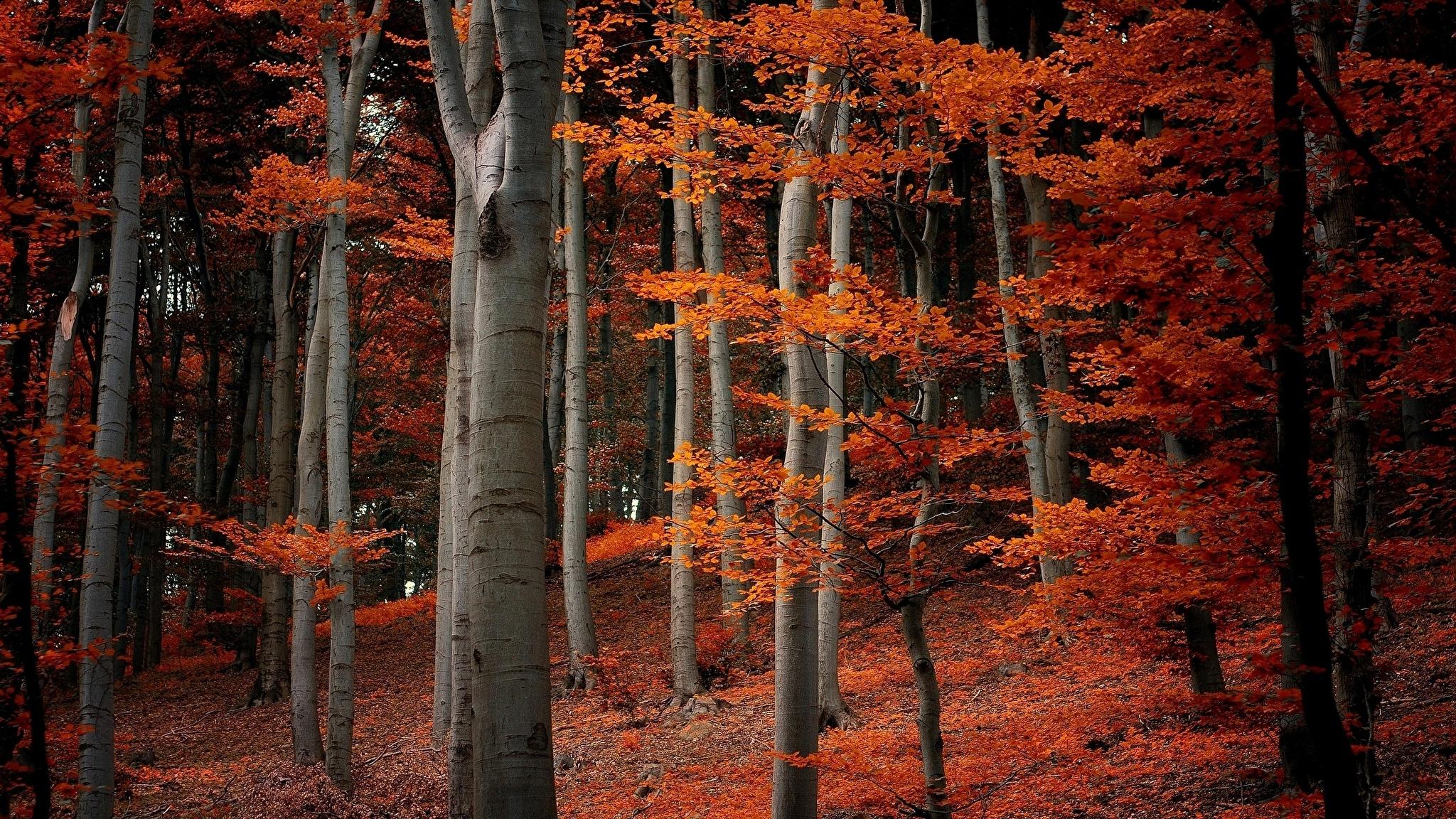 природа деревья листья лес nature trees leaves forest без смс
