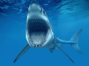 Фотография Подводный мир Акулы Зубы Злой белая 3D_Графика
