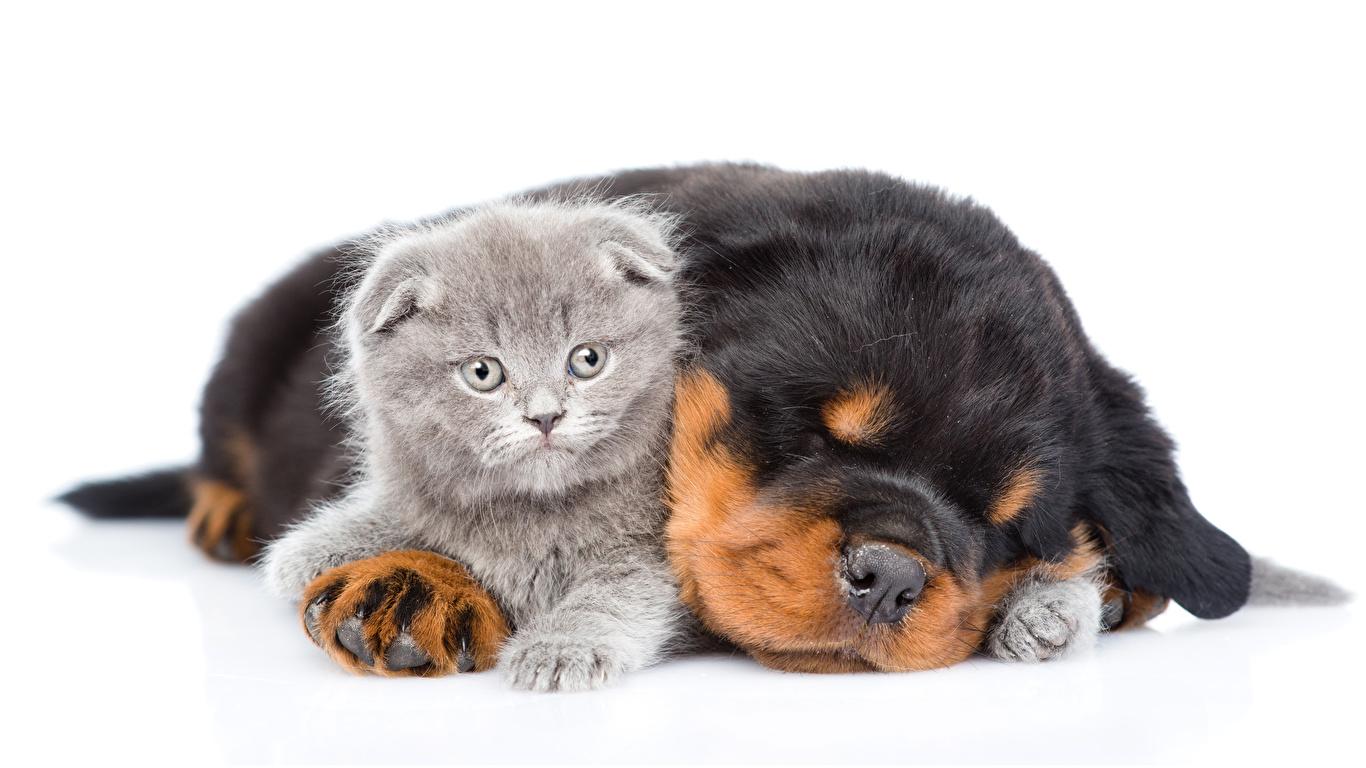 Обои с собаками на телефон