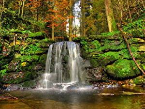 Фотография Водопады Леса Камни Пейзаж Мох Ручей Природа