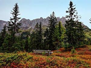 Фото Пейзаж Гора Деревьев Ель Скамья Альп Austrian Природа