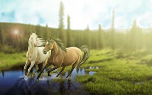 Фотографии Лошадь Трава 3D_Графика