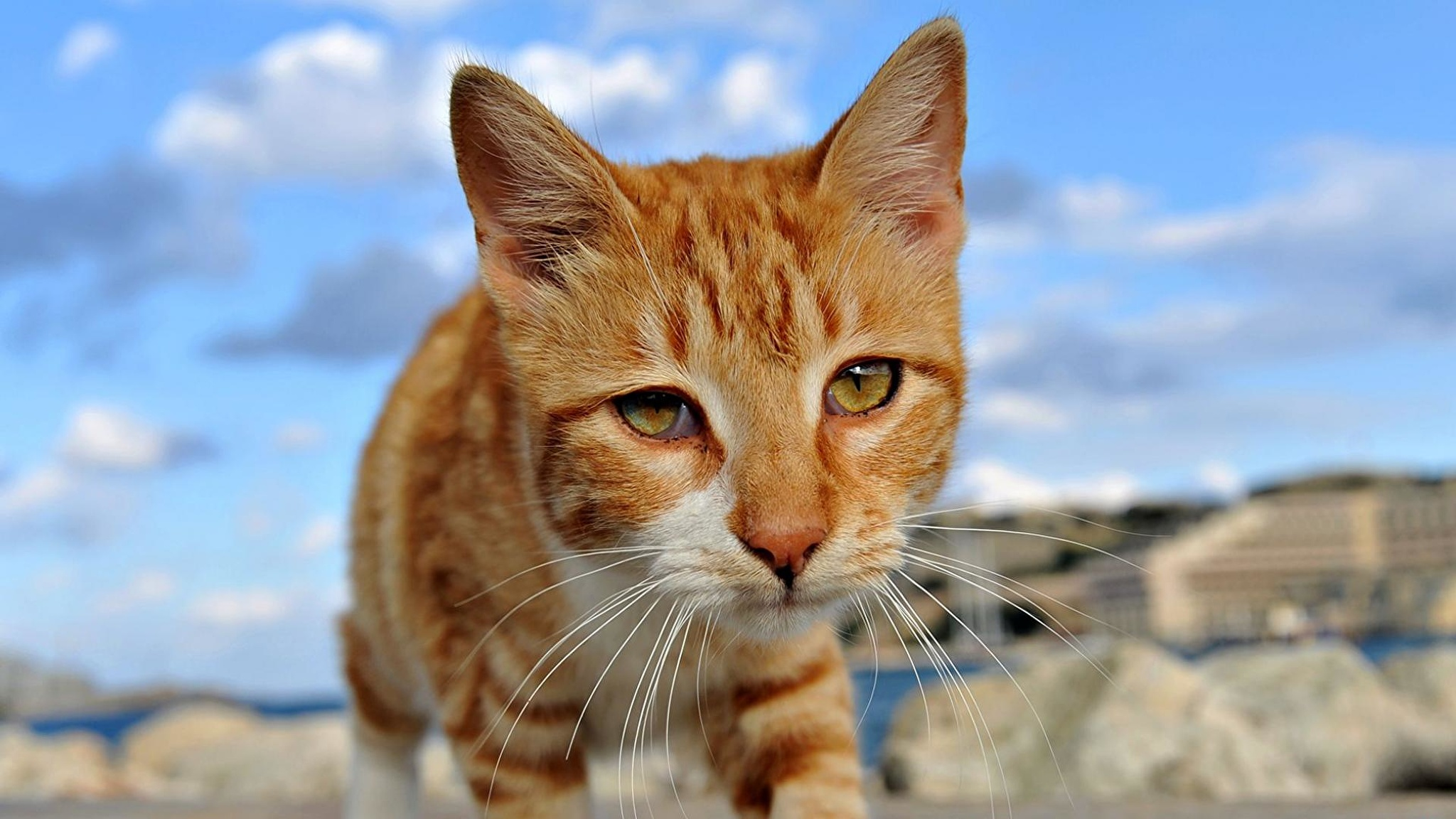 Рыжий грустный кот загрузить