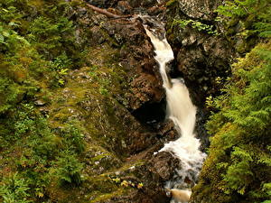 Фотография Водопады Швеция Мох Ручей Dalarna Природа