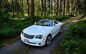 Фотографии Крайслер Леса Дороги Белых Кабриолета Дерево 2005 Crossfire SRT6 машины