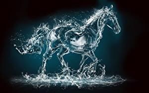 Картинка Лошади Вода Капля Брызги животное 3D_Графика