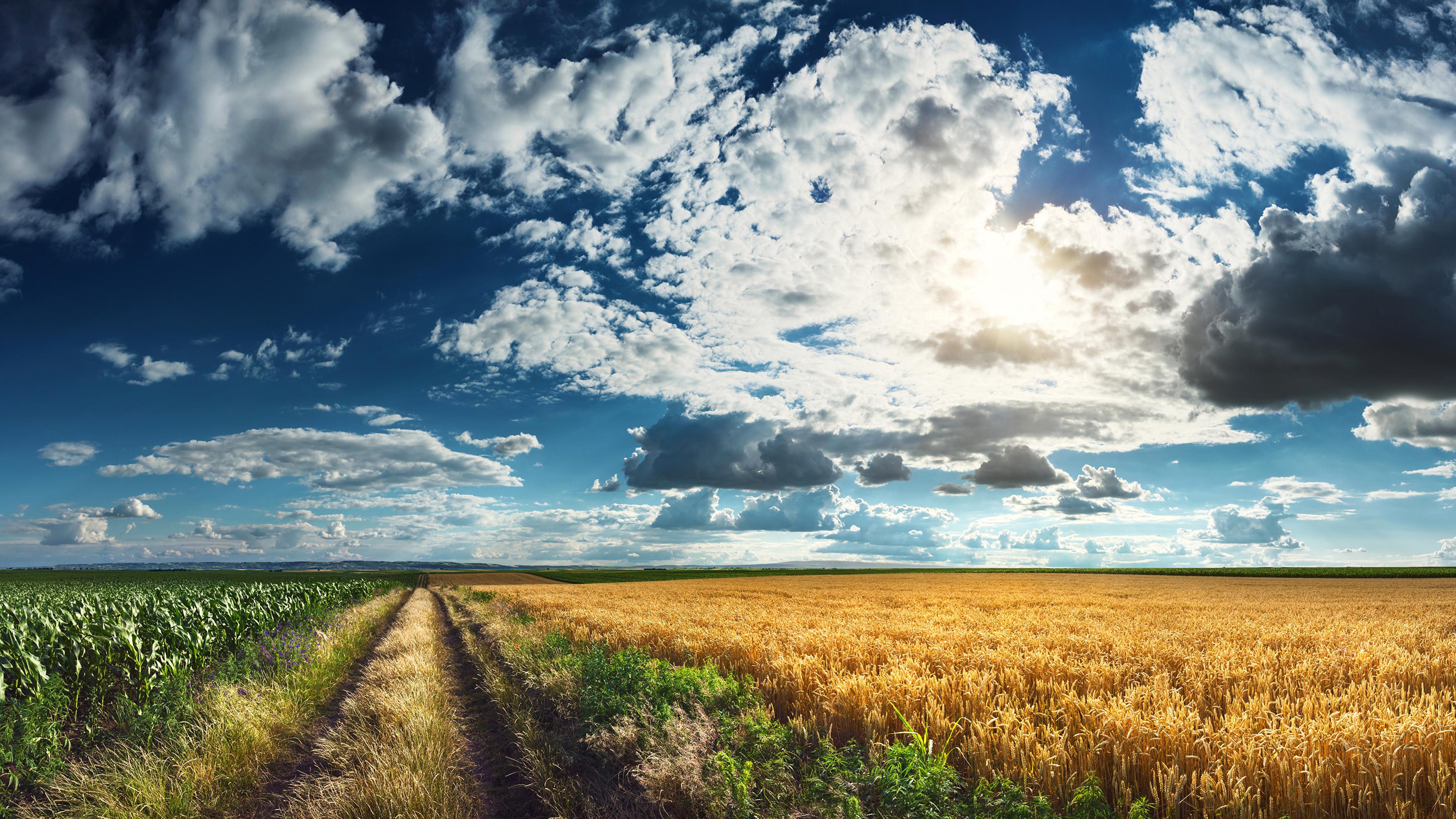 природа поле дорога небо трава загрузить
