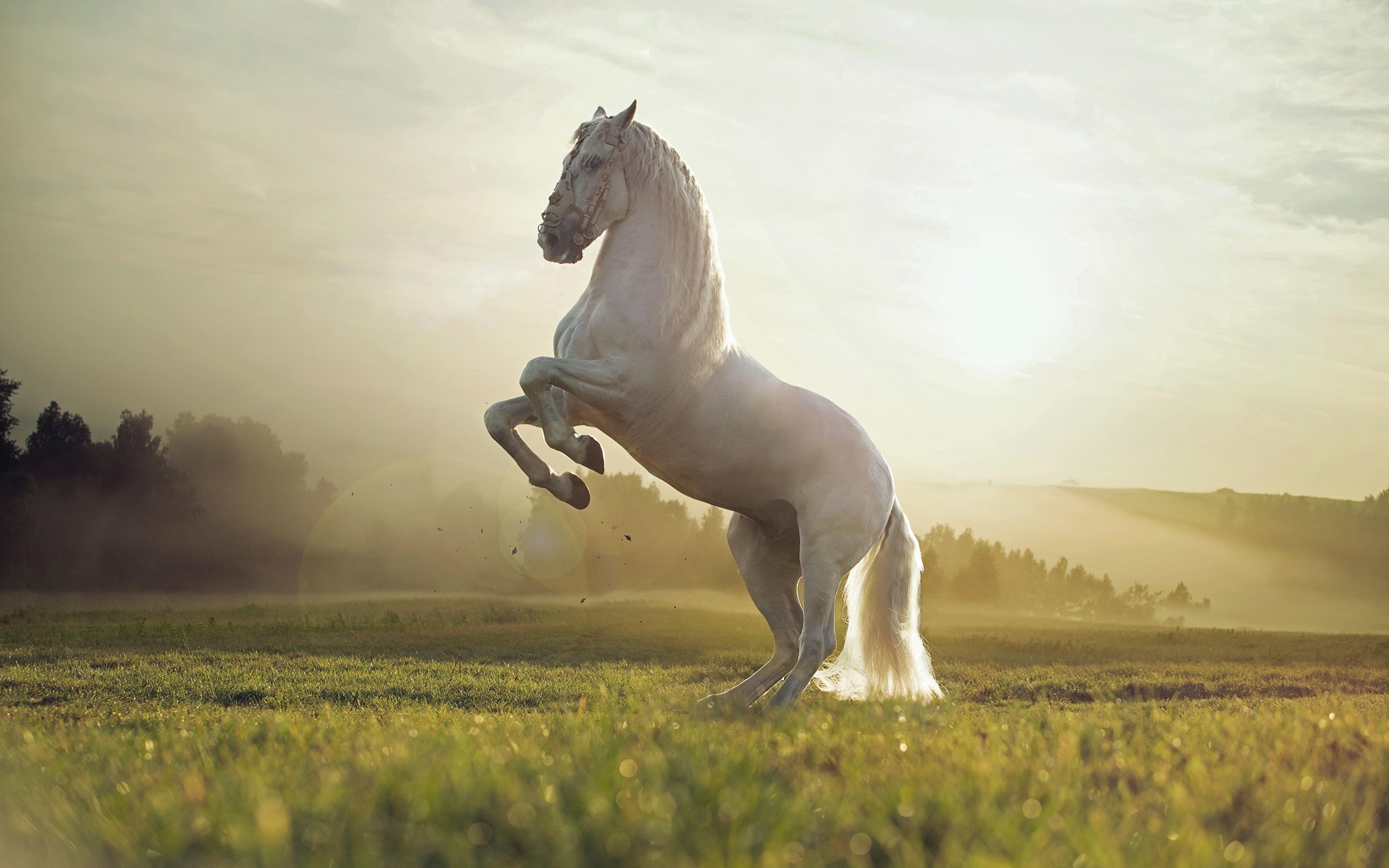 Лошади в поле без смс