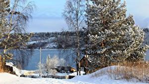 Фотографии Россия Реки Зима Деревья Снега Природа