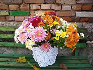 Картинки Хризантемы Много Скамья Цветы