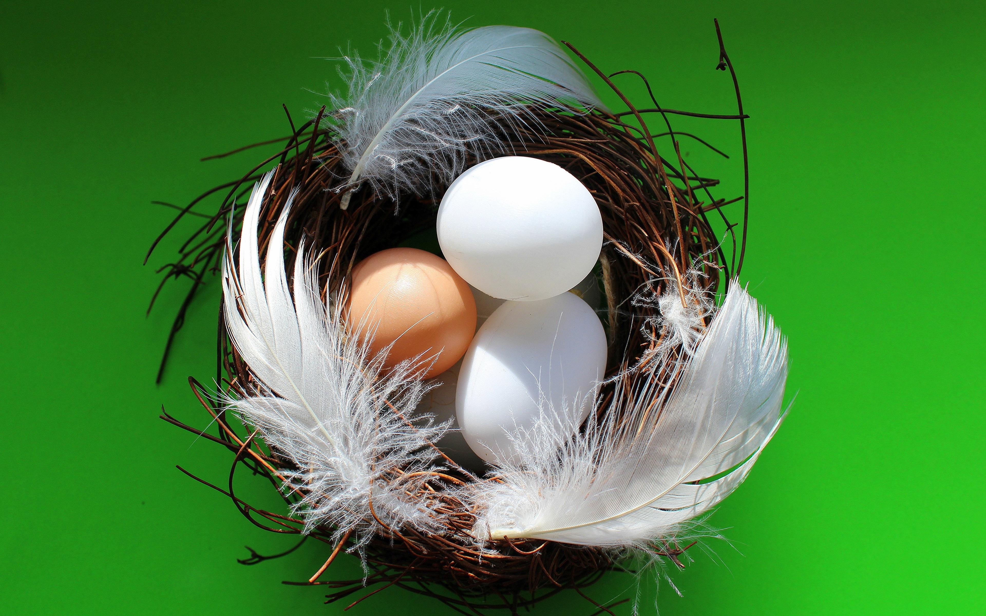Обои перо, яйца. Разное foto 11