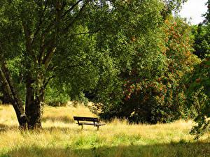 Фотография Англия Парки Лондон Трава Деревьев Скамья Hampstead Heath Природа