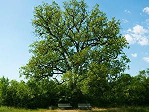 Картинка Лето Деревьев Скамья Природа