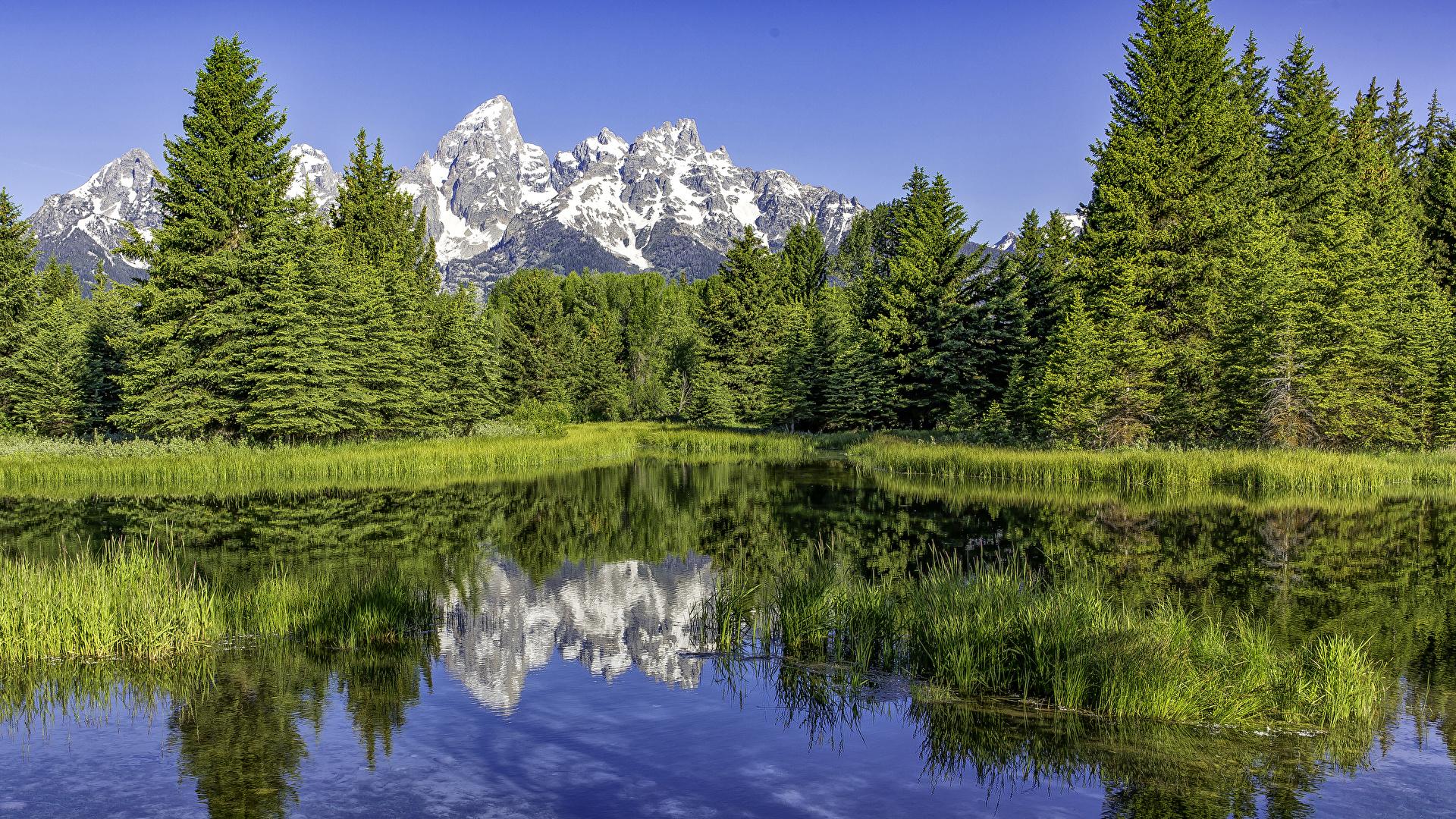 Фото штаты Grand Teton National Park Ель Горы Природа лес парк Озеро 1920x1080 США америка ели гора Леса Парки