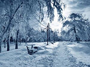 Фотография Сезон года Зима Пейзаж Парк Деревья Снеге Уличные фонари Природа