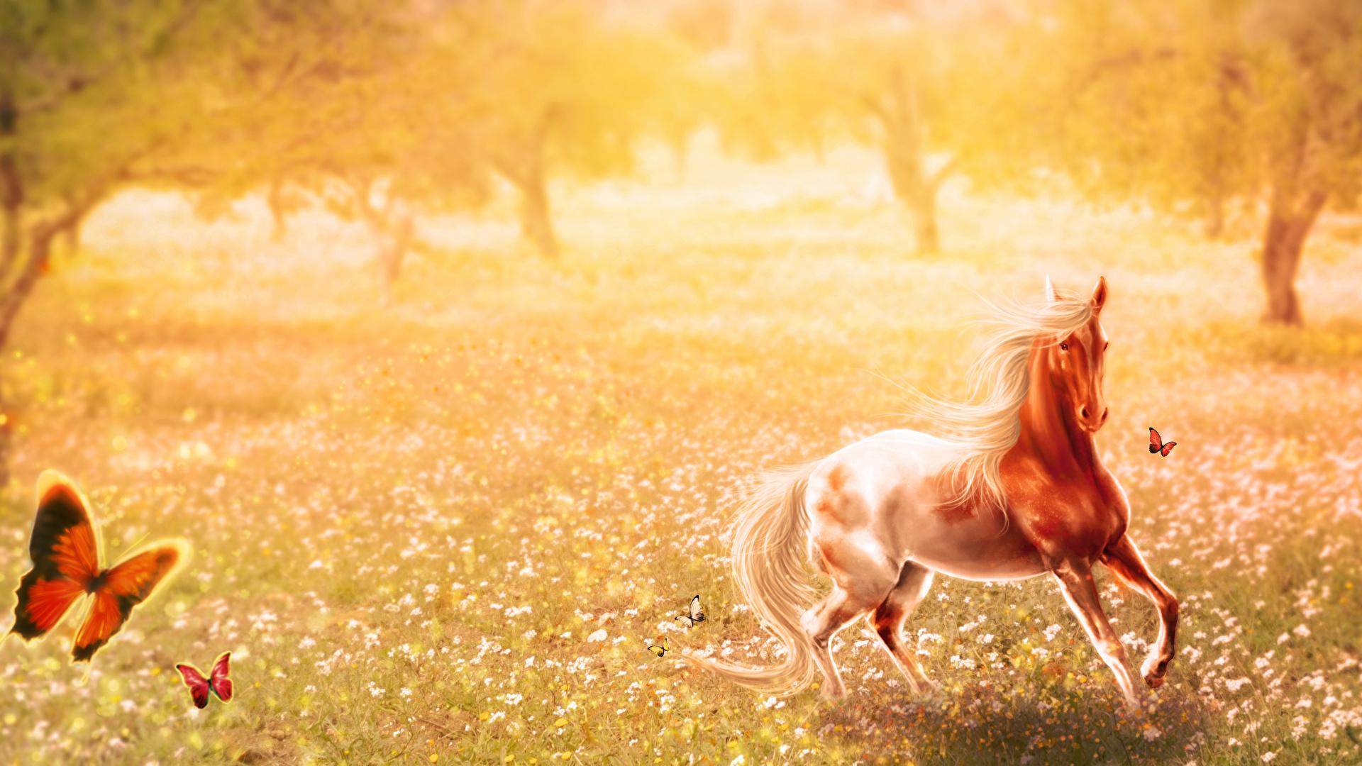 Фото лошадь Бабочки Луга Животные Рисованные 1920x1080 Лошади бабочка животное