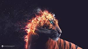 Фотография Большие кошки Тигр Огонь 3D_Графика