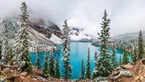 Картинка Канада Парки Озеро Горы Зимние Банф Ели Moraine Lake Природа