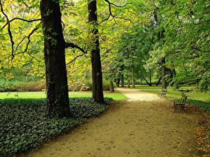 Фотографии Парки Дороги Деревьев Скамья Природа