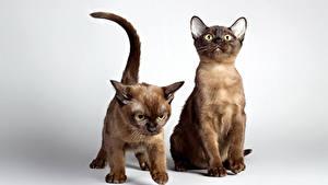 Фотография Кот 2 Котят животное