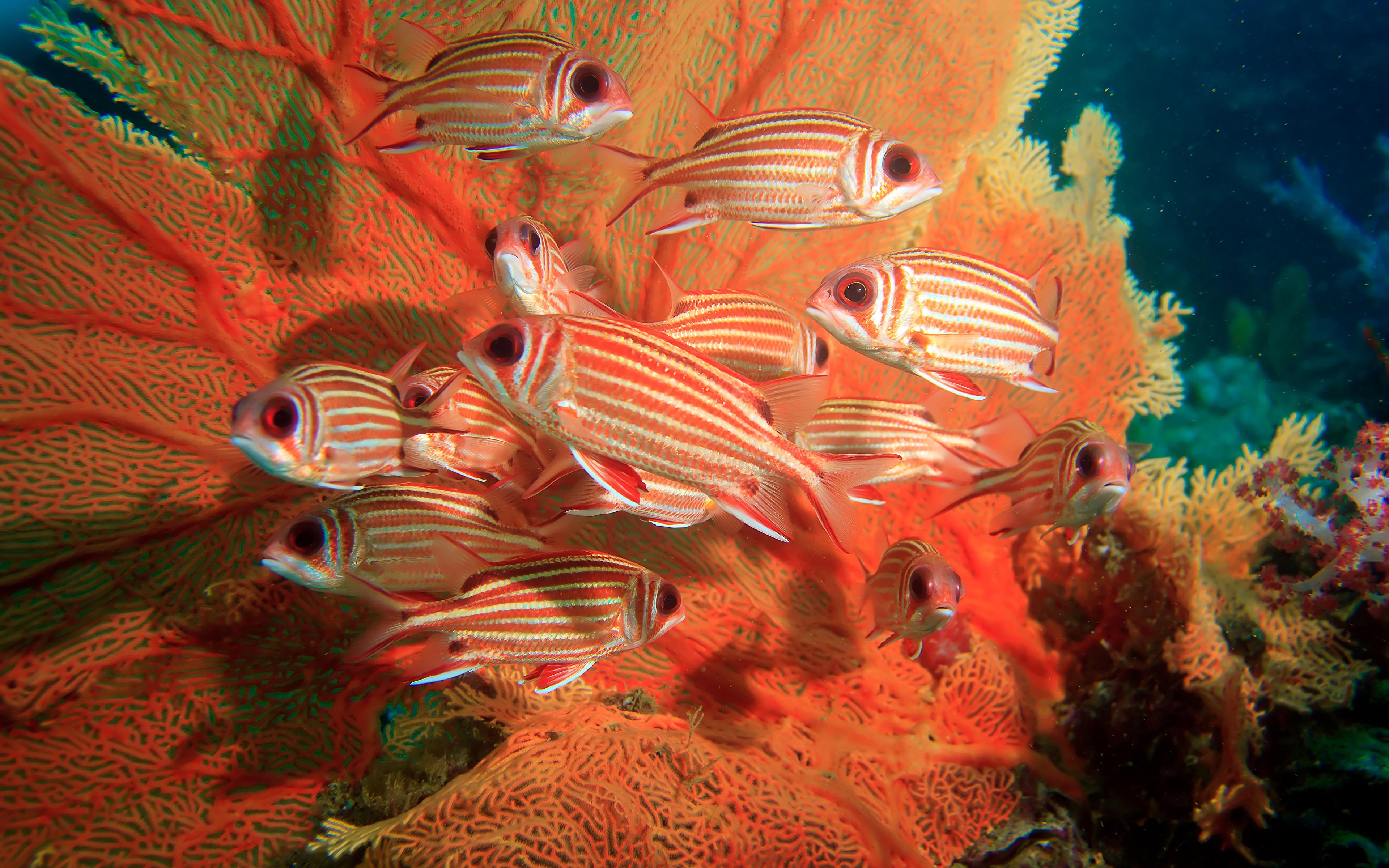 Фотографии Рыбы Squirrelfish животное 3840x2400 Животные