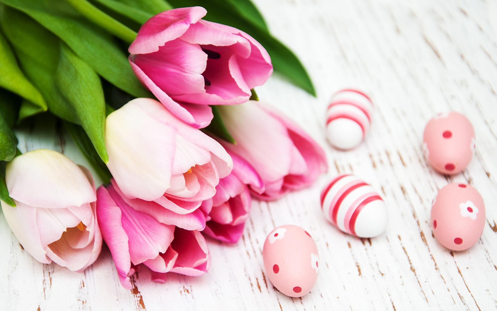 Обои для рабочего стола Пасха яйцами Розовый Тюльпаны Цветы 1920x1200 яиц яйцо Яйца тюльпан розовая розовые розовых цветок