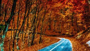 Картинки Дороги Леса Осень Деревья Листья Асфальт Природа