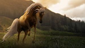Фотографии Лошадь Луга Трава Прыгать животное 3D_Графика