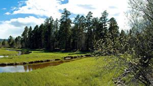 Картинка Россия Реки Весна Траве Деревья Сибирь Природа