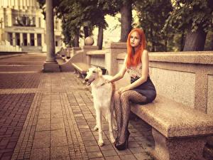 Картинки Собаки Борзых Рыжих Скамейка Улице Сидит девушка Животные