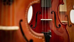 Обои Скрипки Вблизи