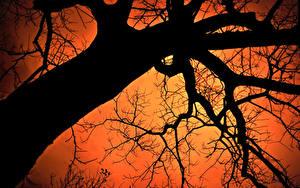 Фотография Деревья Ветки Ствол дерева Силуэта Вид снизу Природа