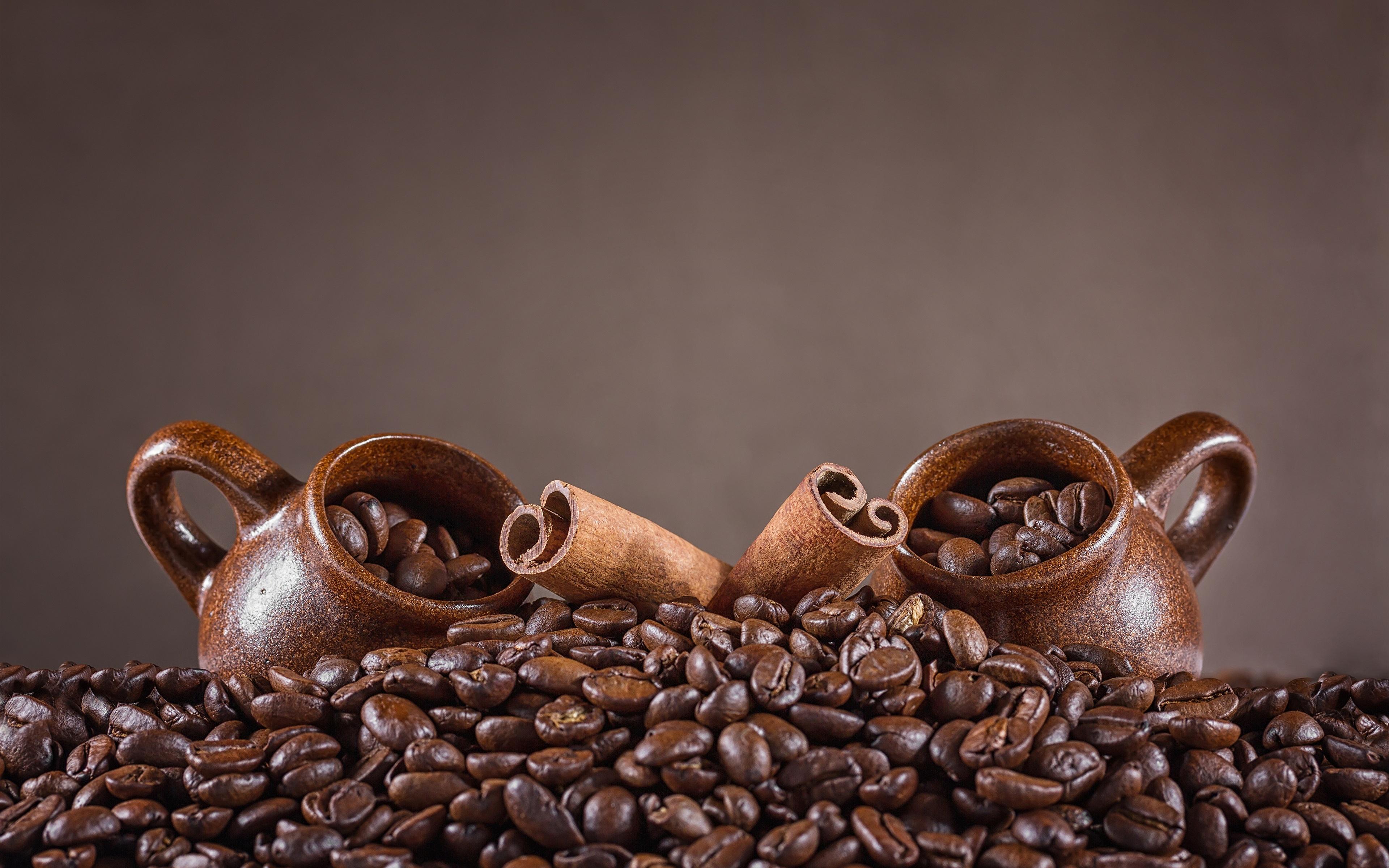 кофе сова еда бесплатно