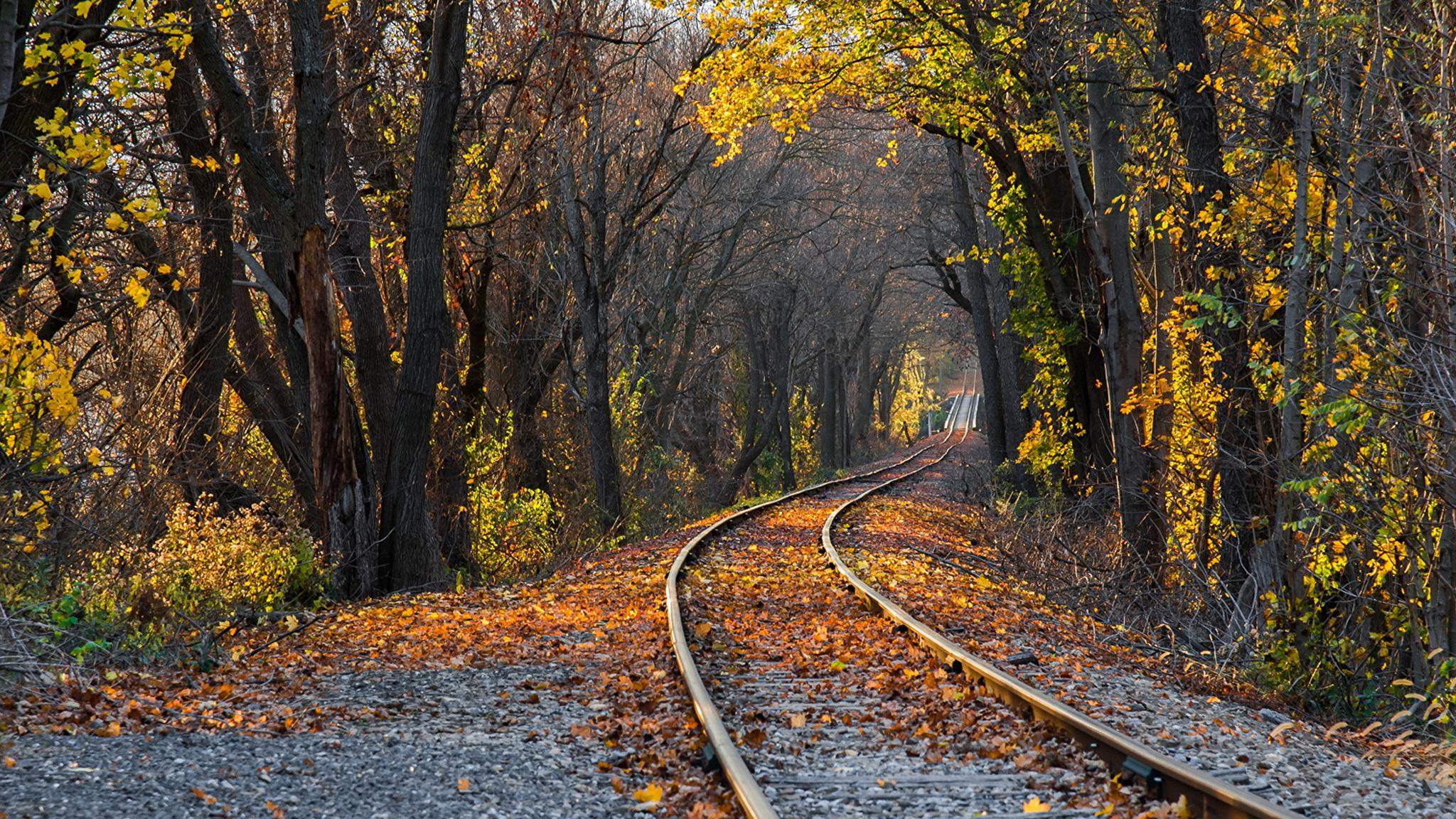 Железная дорога в лесу анонимно