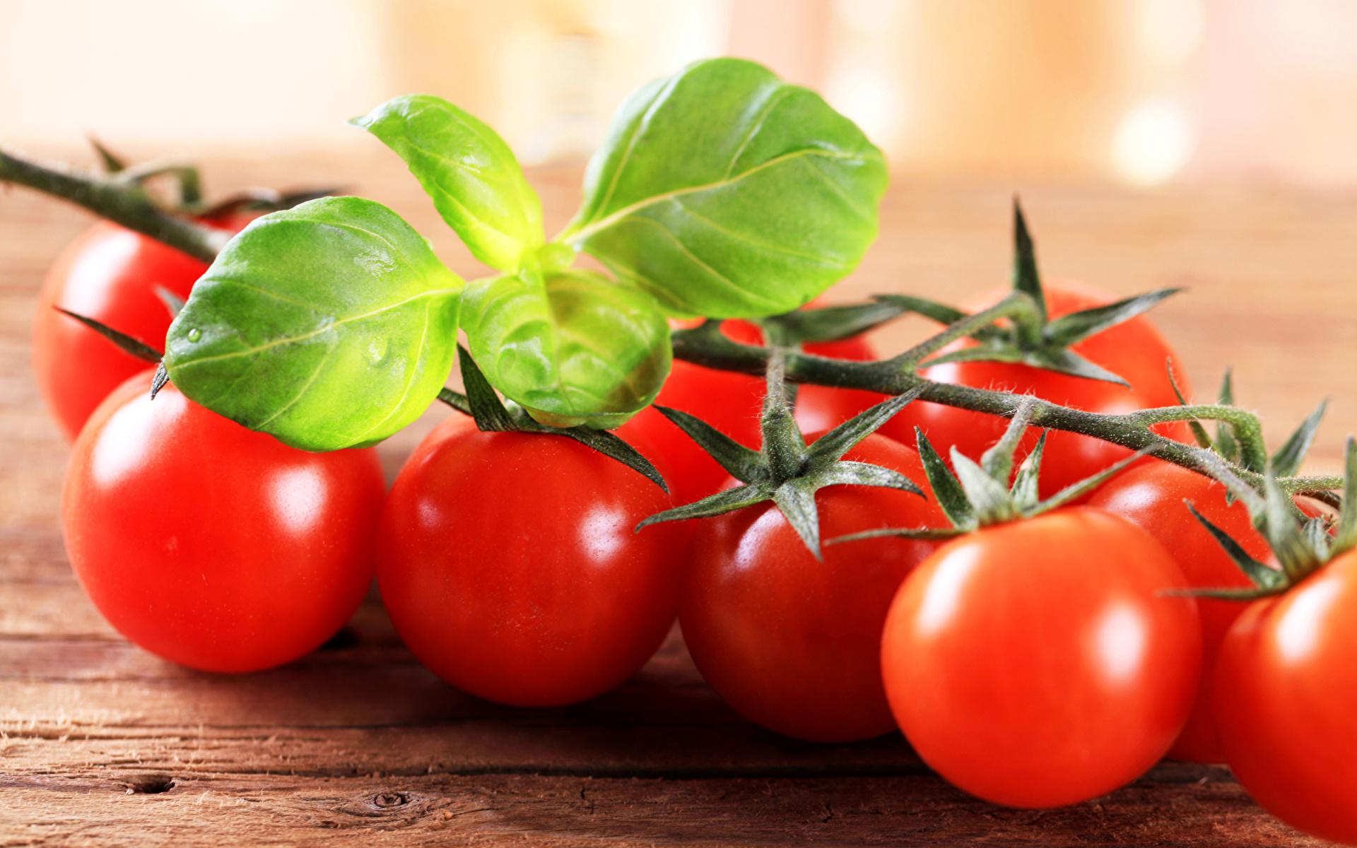 Обои для рабочего стола Томаты красные Овощи Продукты питания вблизи 1920x1200 Красный красная красных Помидоры Еда Пища Крупным планом