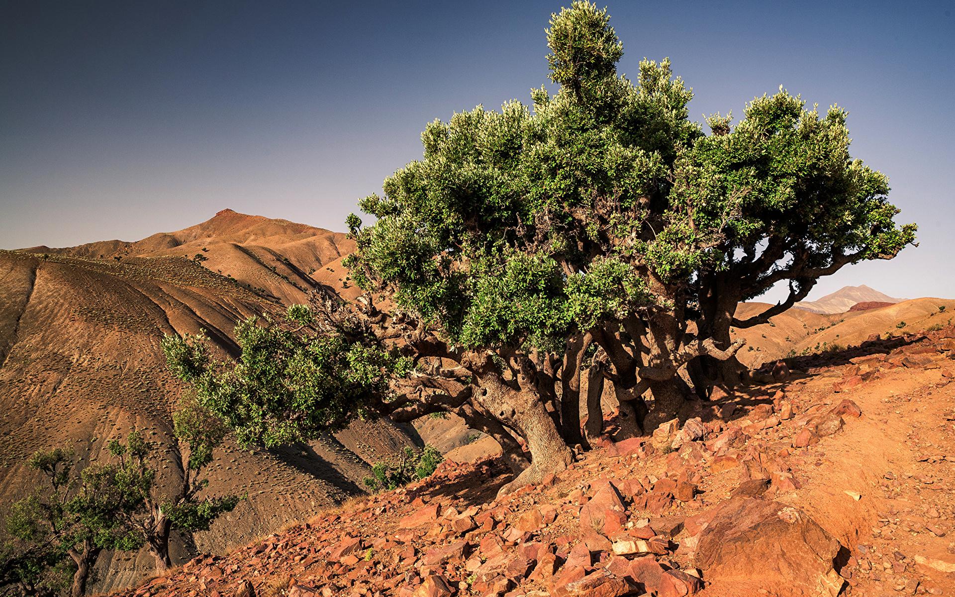 Картинка Африка Марокко Toufrine, Tadla-Azilal Природа Камень дерева 1920x1200 Камни дерево Деревья деревьев