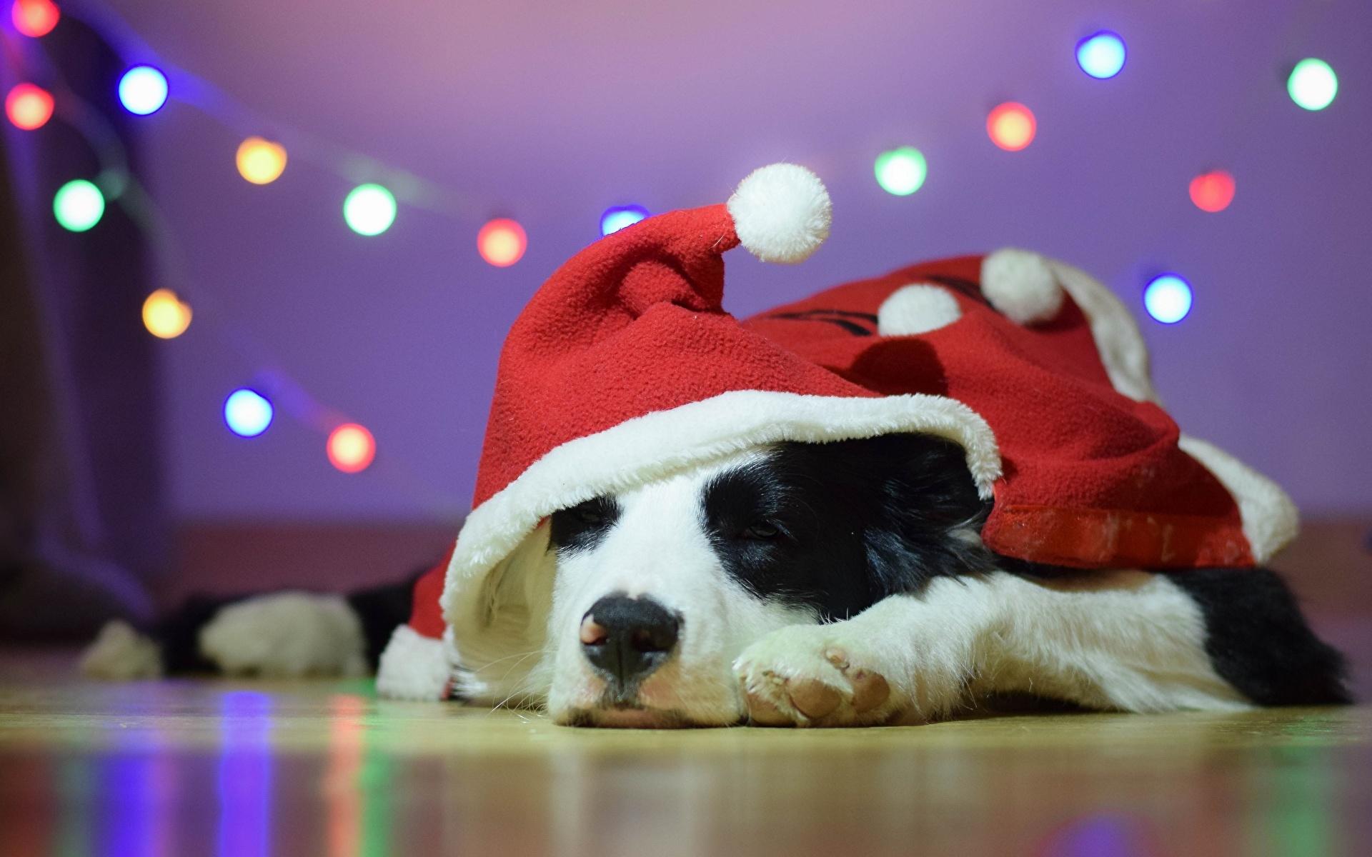 щенок с новогодним колпаком загрузить