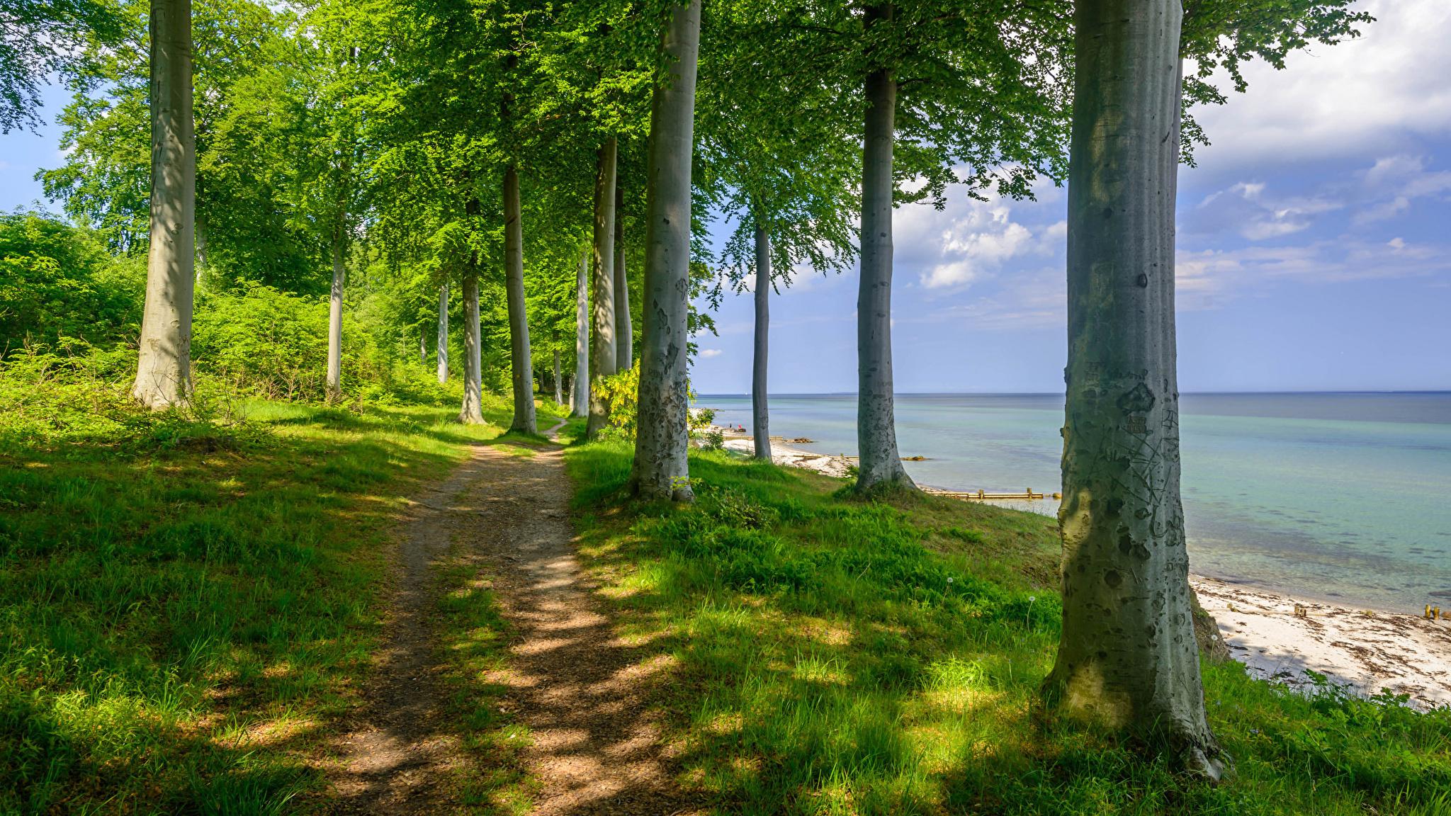 Деревья возле озера загрузить