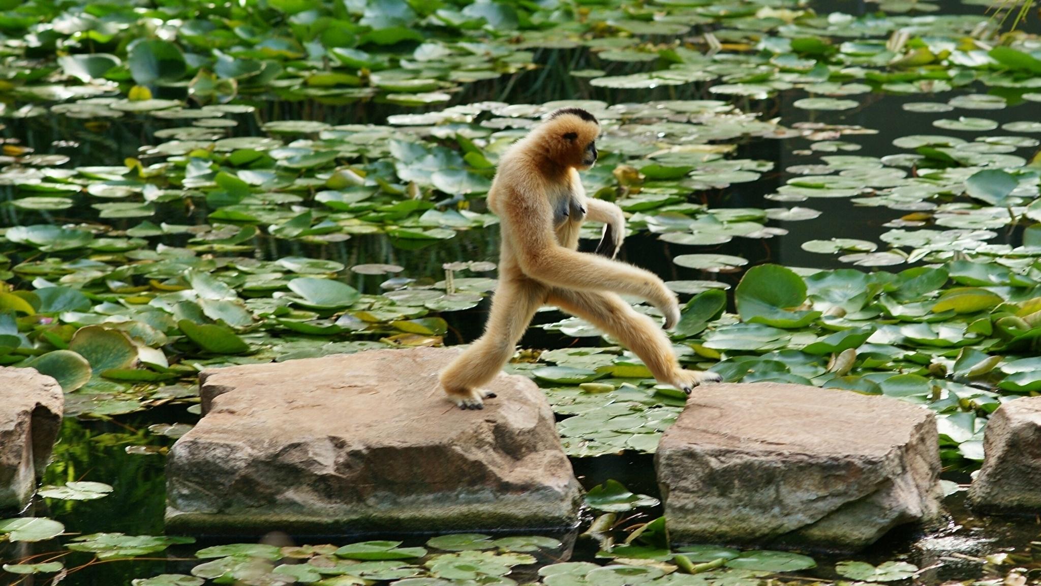 Отдыхающая обезьяна на телефон